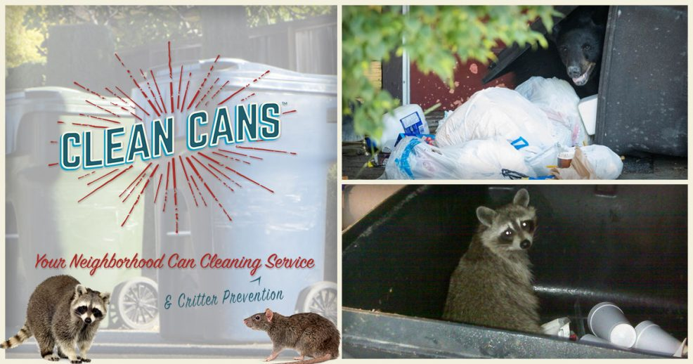 How To Keep Critters Out Of Your Trash Can Clean Cans